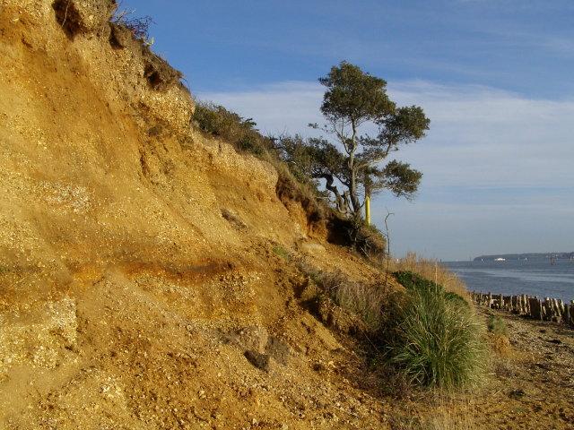 Sandstone cliff, Lepe - geograph.org.uk - 1146133