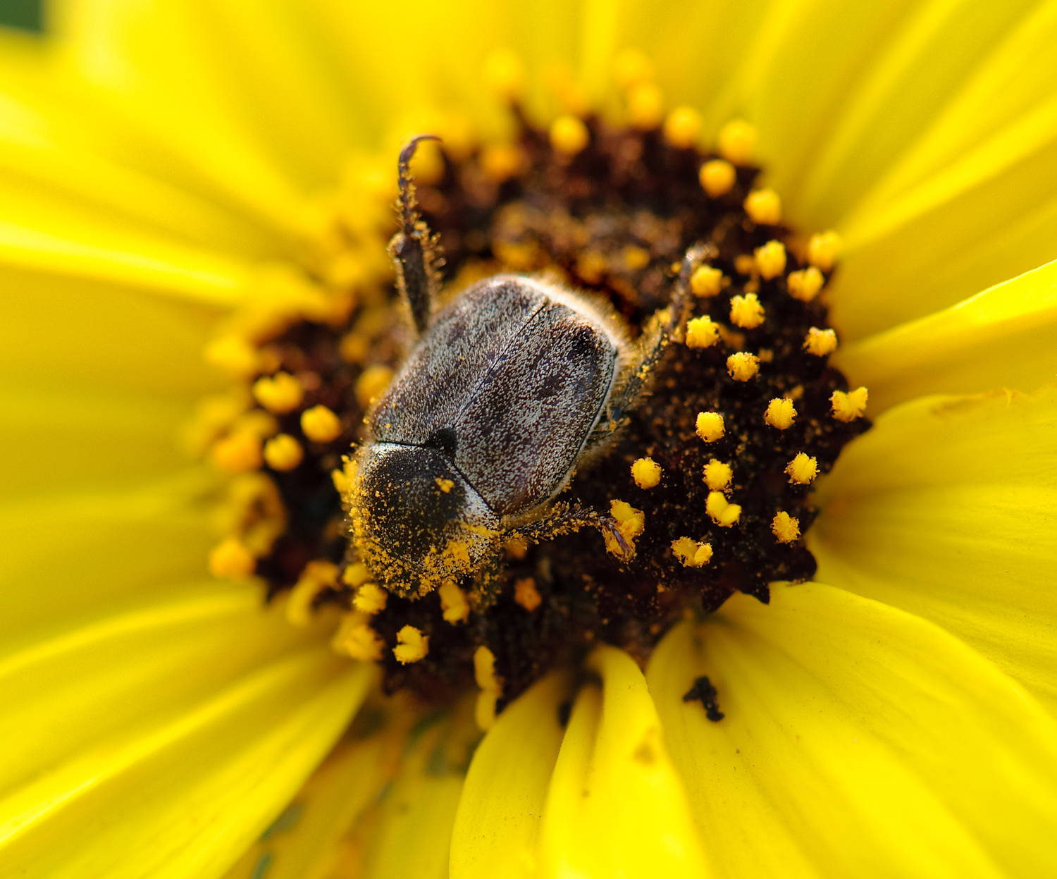 Pollinators To Save The World Student Investigations In