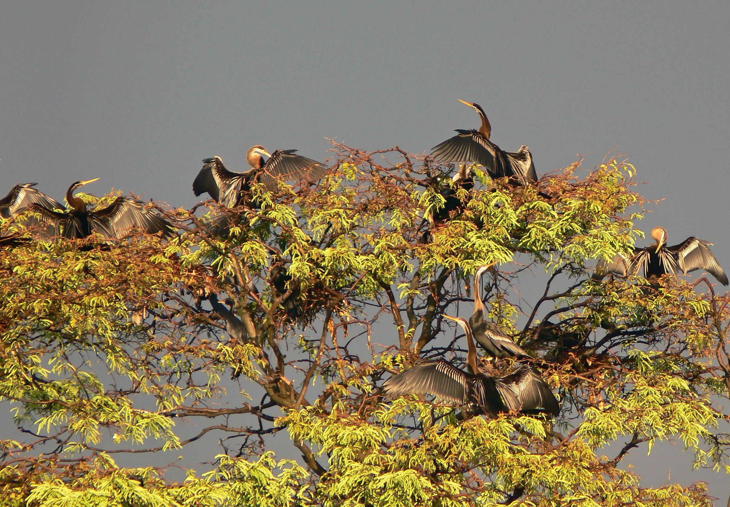List Of Birds Kerala