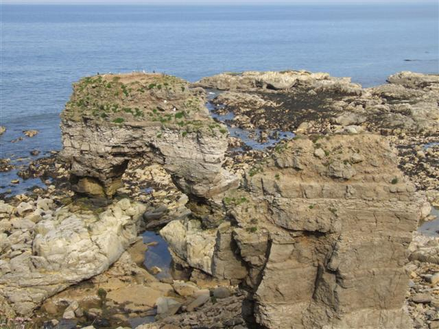 Stacks off Lizard Point - geograph.org.uk - 181999
