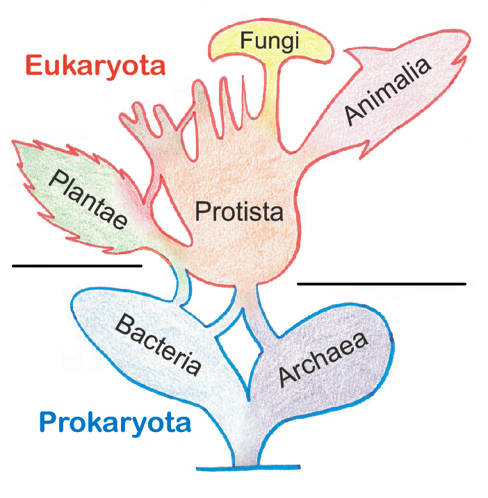File:Tree of Living Organisms.PNG - Wikimedia Commons