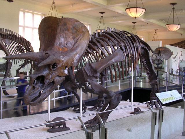 Soubor:Triceratops Struct.jpg