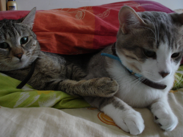 Resting cats on Wikimedia Commons