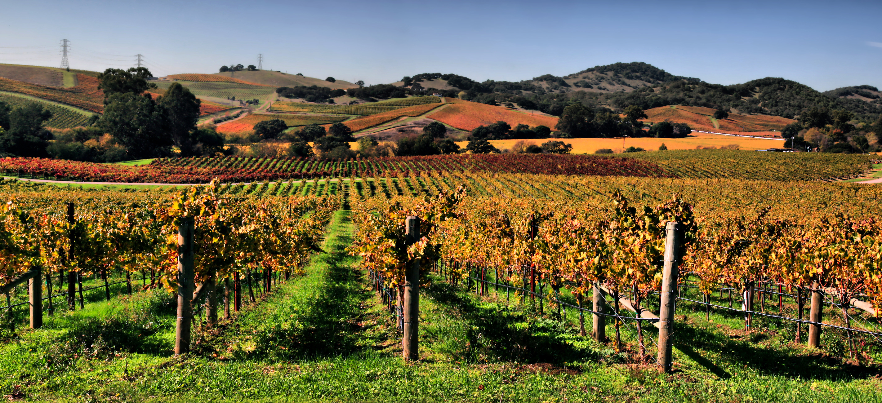 picture of Napa Valley vineyard for travel article