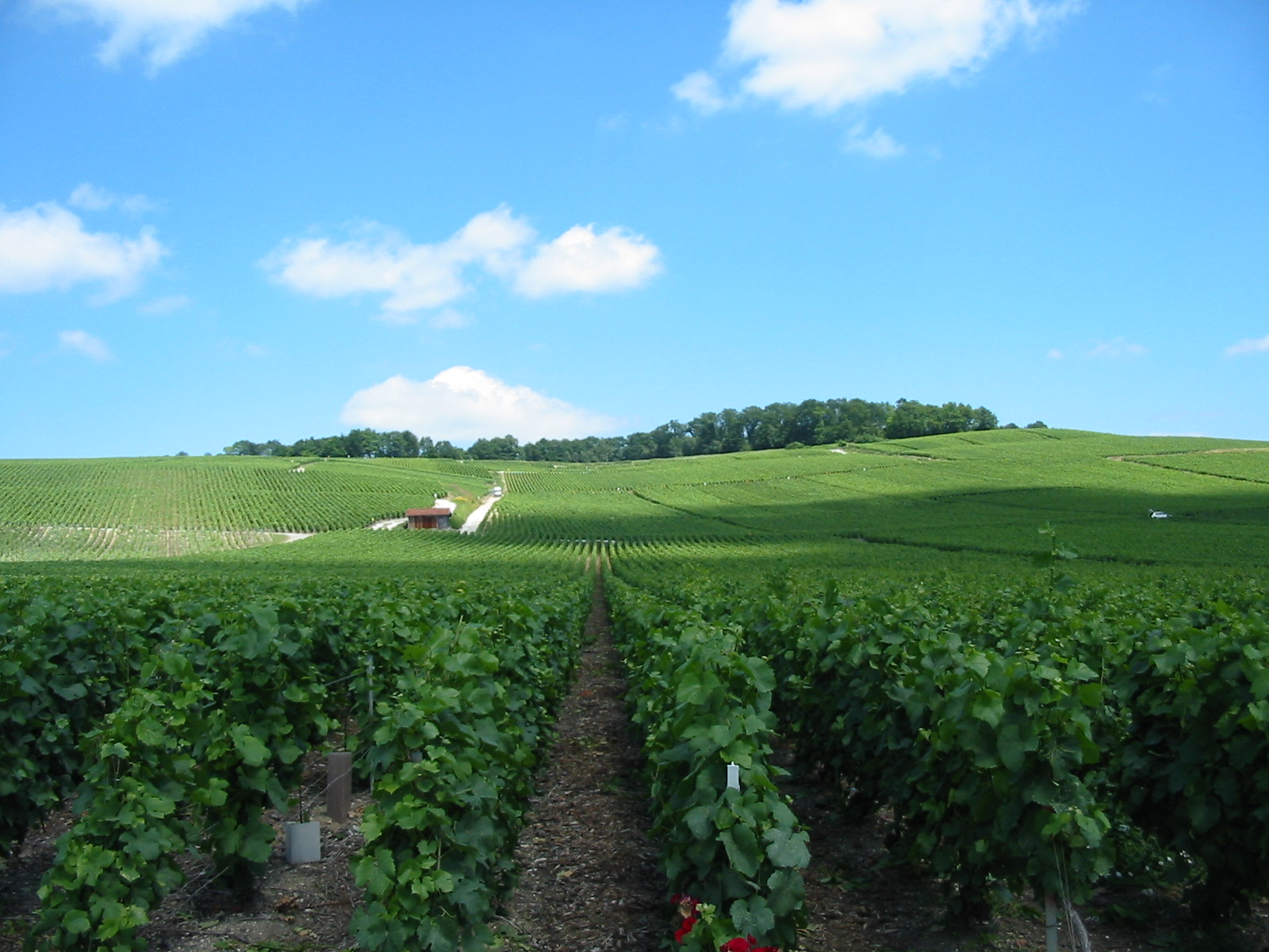 http://upload.wikimedia.org/wikipedia/commons/a/a8/Vineyards_near_Epernay.jpg
