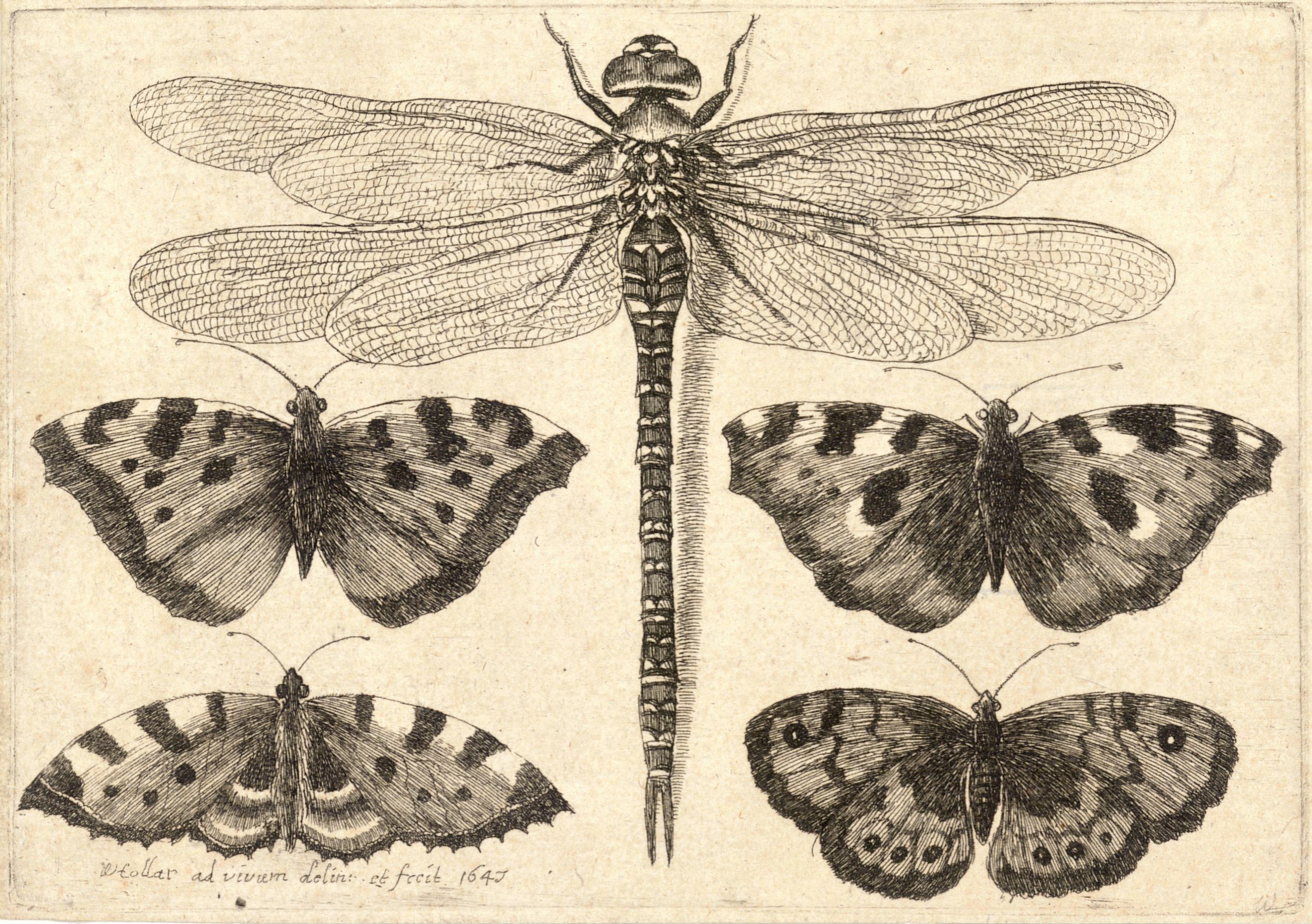Image Result Forerflies Printables Coloring