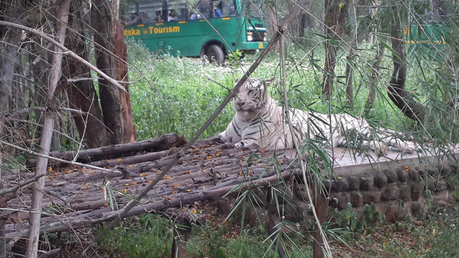 """Résultat de recherche d'images pour """"Bannerghatta National Park bangalore"""""""