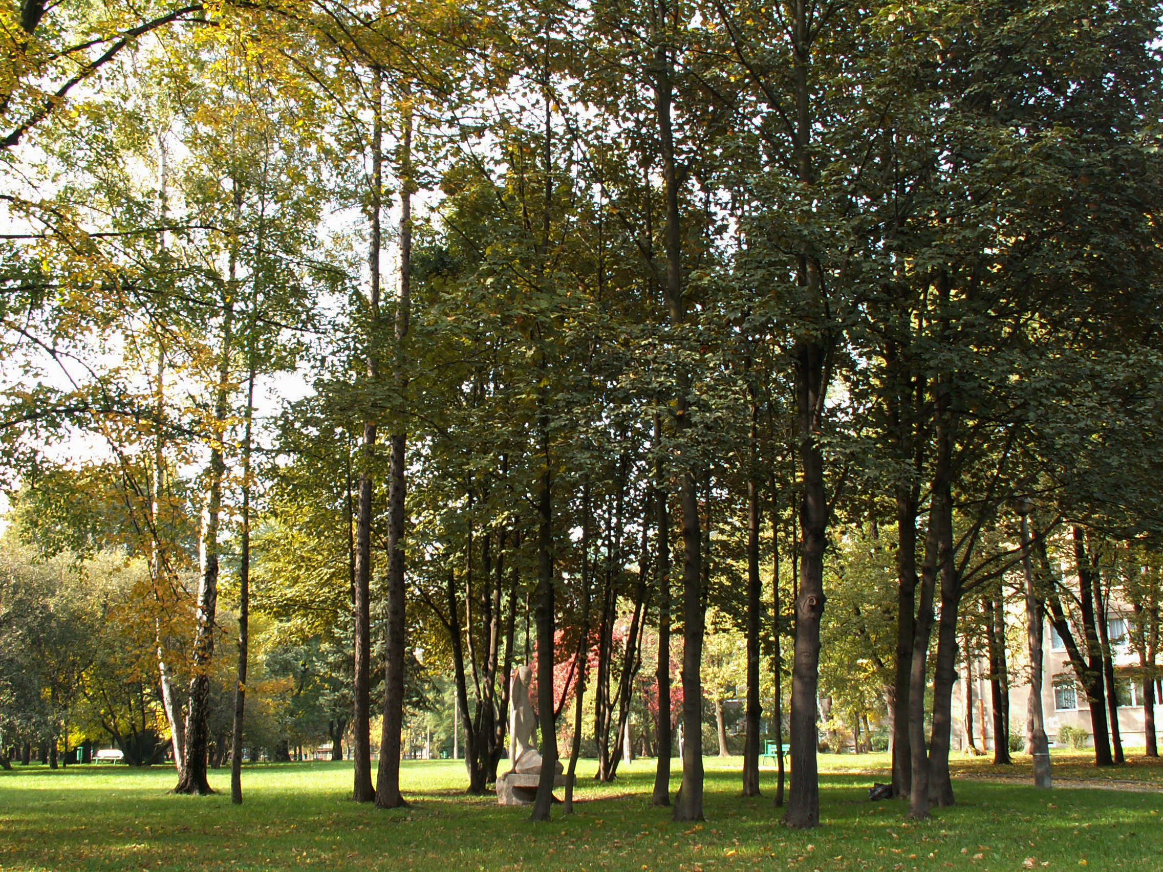Plik wisniowy sad cherry orchard park os kolorowe nowa for Orchard park
