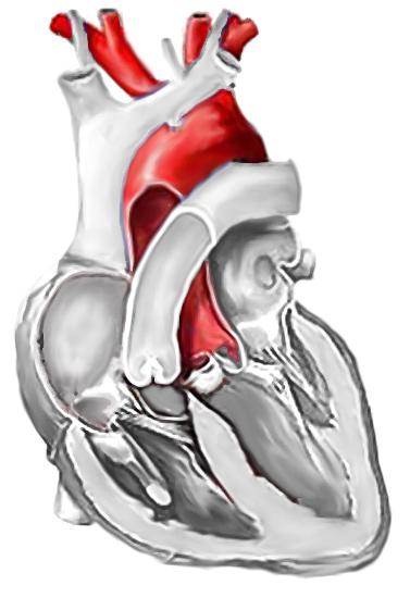 aorta wikizionario
