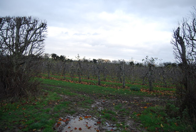 File:Apple Orchard - geograph.org.uk - 1614278.jpg