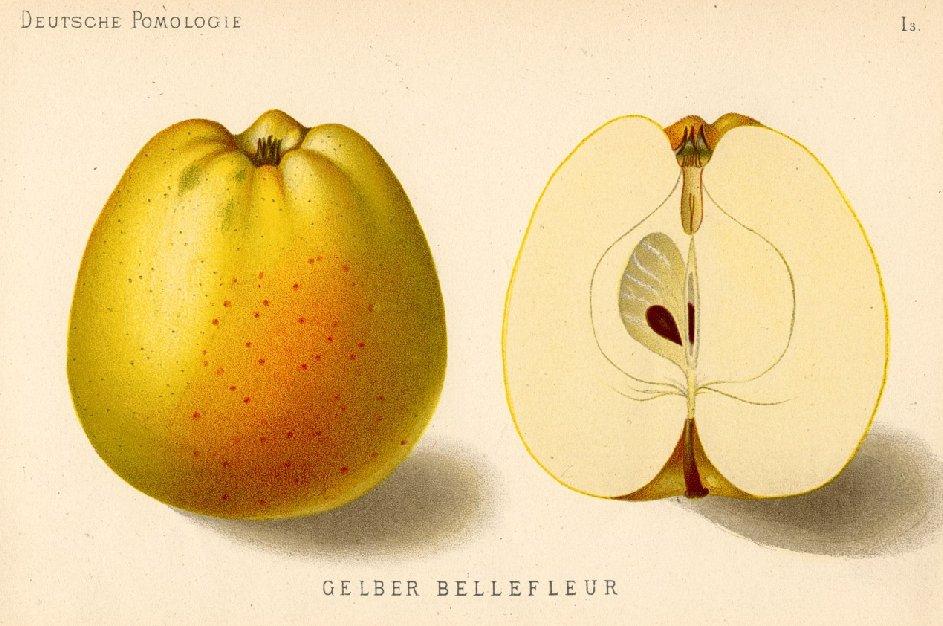 File Belle Fleur Jaune Jpg Wikipedia