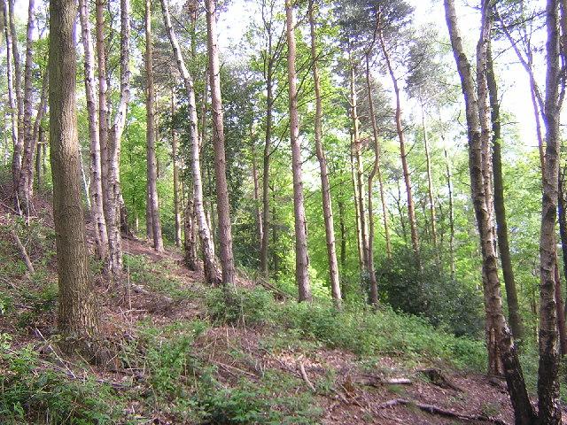 Belmont Wood, Yeadon - geograph.org.uk - 11861