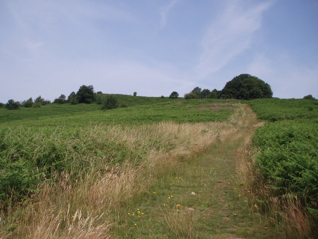 Bringsty Common - geograph.org.uk - 194898