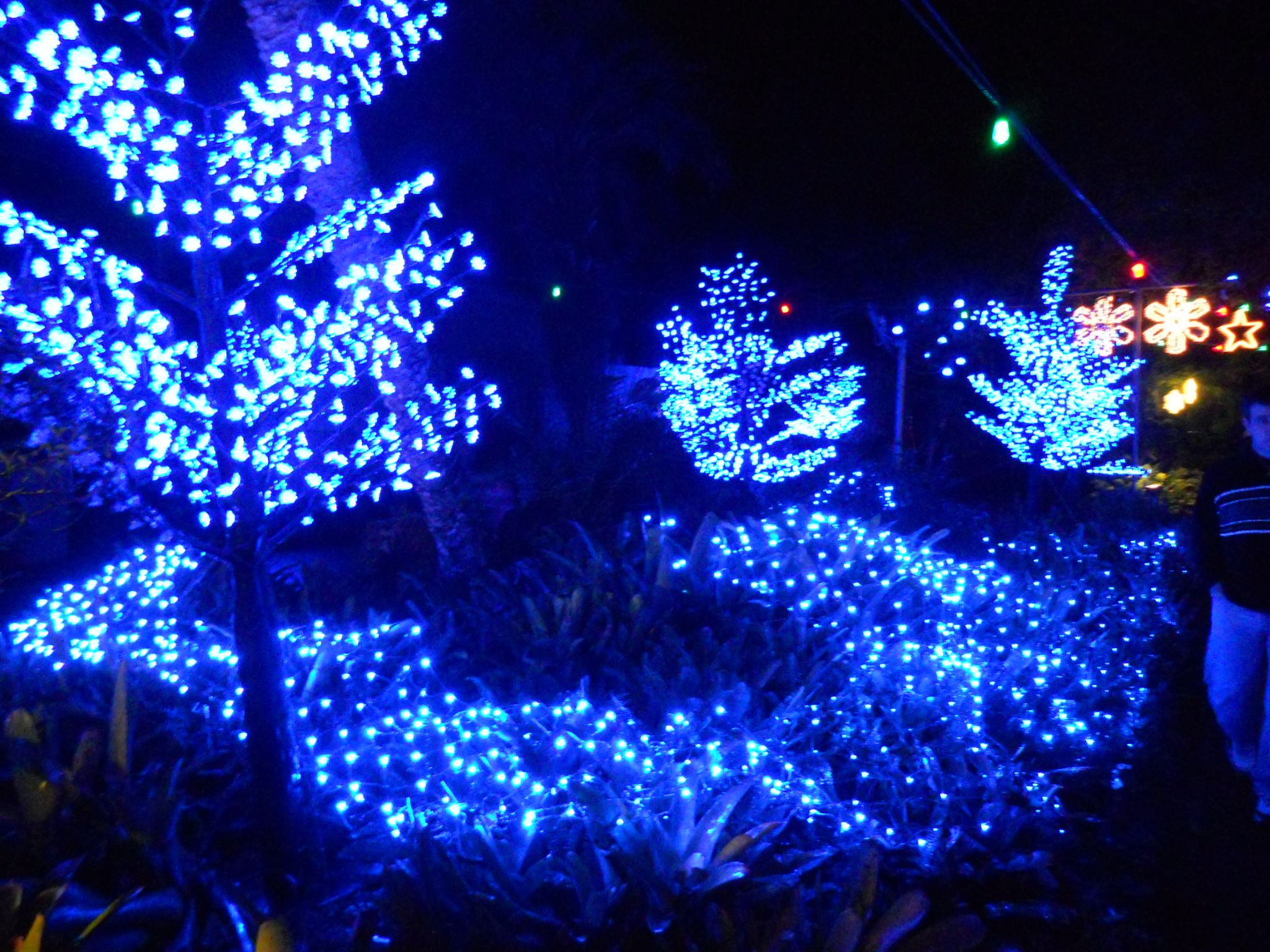 File:Christmas Lighting - Lowry Park Zoo2.jpg - Wikimedia ...