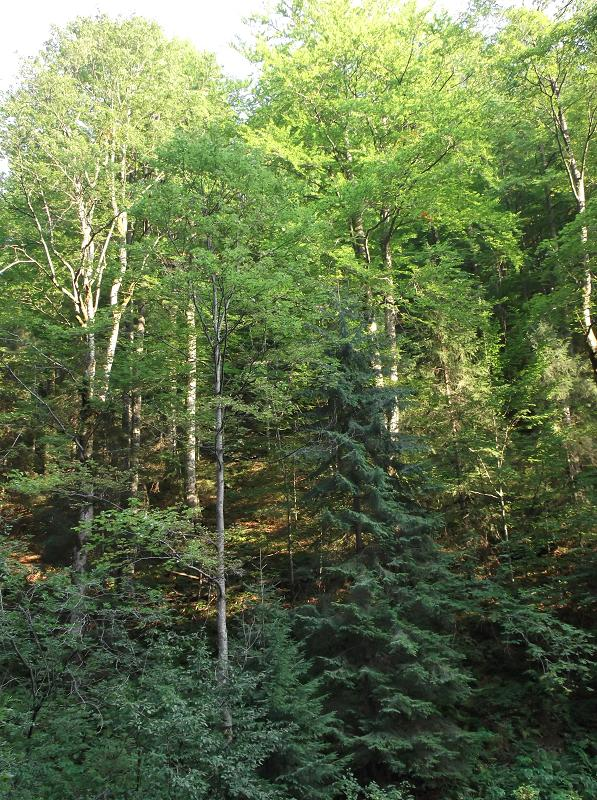 a description of deciduous forests 11 description of temperate forests temperate forests cover more than 20  million km2 of the  deciduous forests of the united states, europe, western asia .