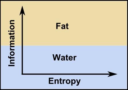 Fat-water-information-entropy.jpg