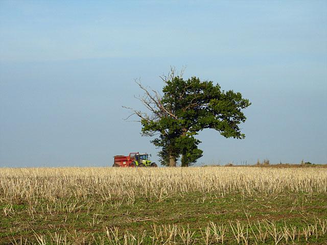 Field near Bigod Way - geograph.org.uk - 221983
