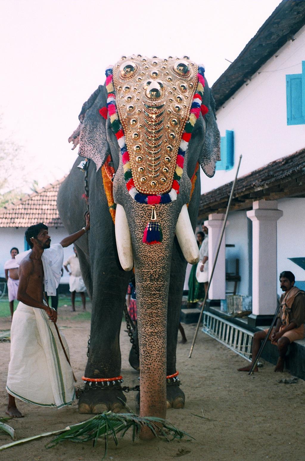 ഗുരുവായൂർ പത്മനാഭൻ - വിക്കിപീഡിയ