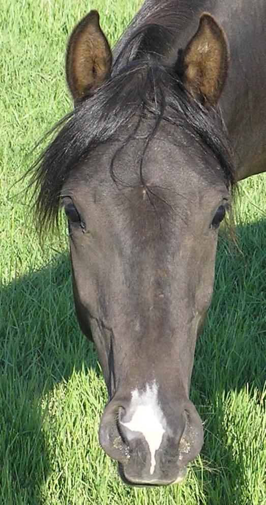 HorseWithSnip.jpg