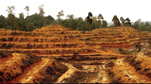 Risultati immagini per palm oil deforestation