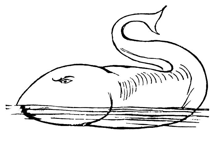 Lear - Whale.jpg