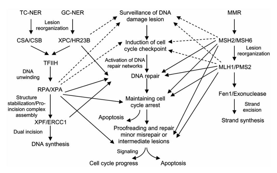 biology week 3 10csabol michaelsci2013 : diagram of nucleotide - findchart.co