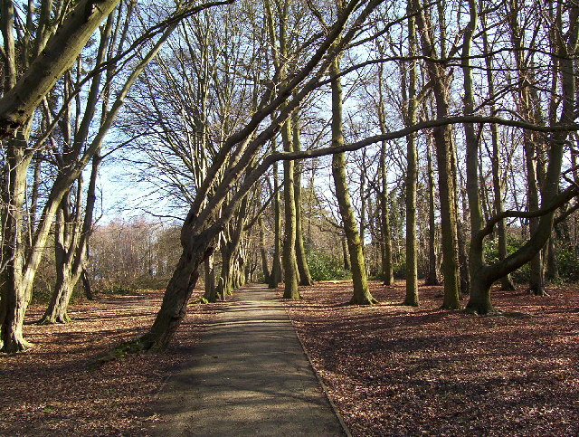 Moat Mount tree lined walk. - geograph.org.uk - 127641