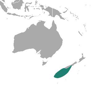 New Zealand Sea Lion Food Type