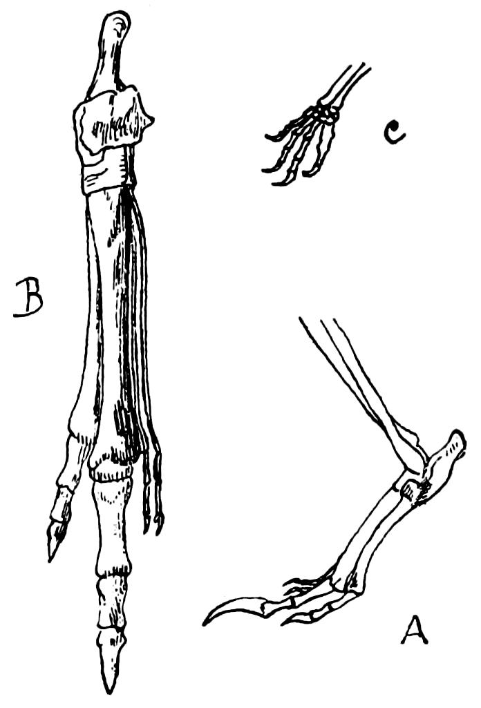 Foot Type By Shoe Wear