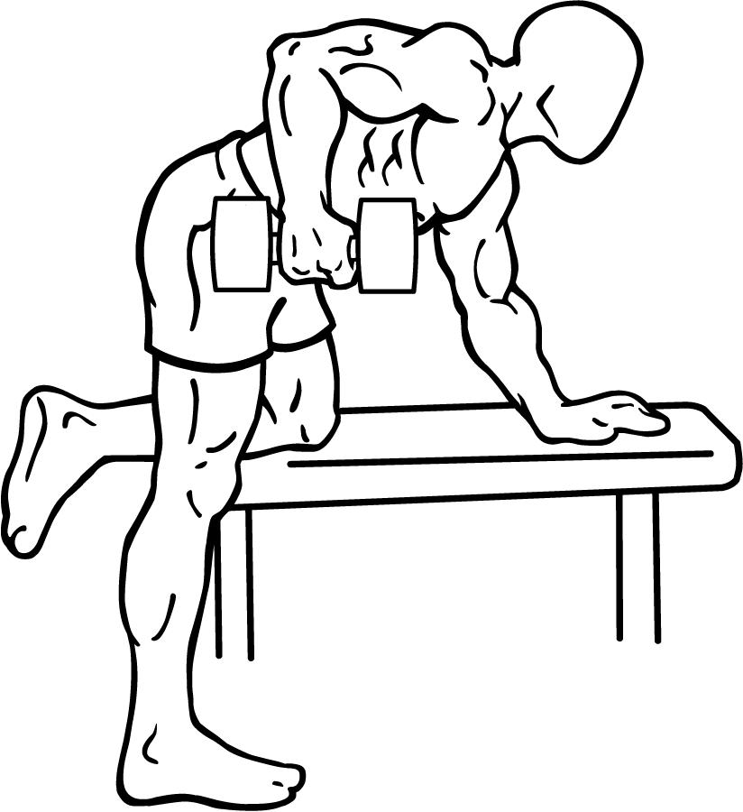 File:Rear-deltoid-row-1.png - Wikimedia Commons