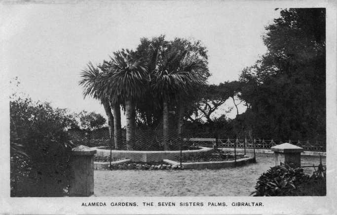 File:Seven Sisters Palms, Alameda Gardens.jpg