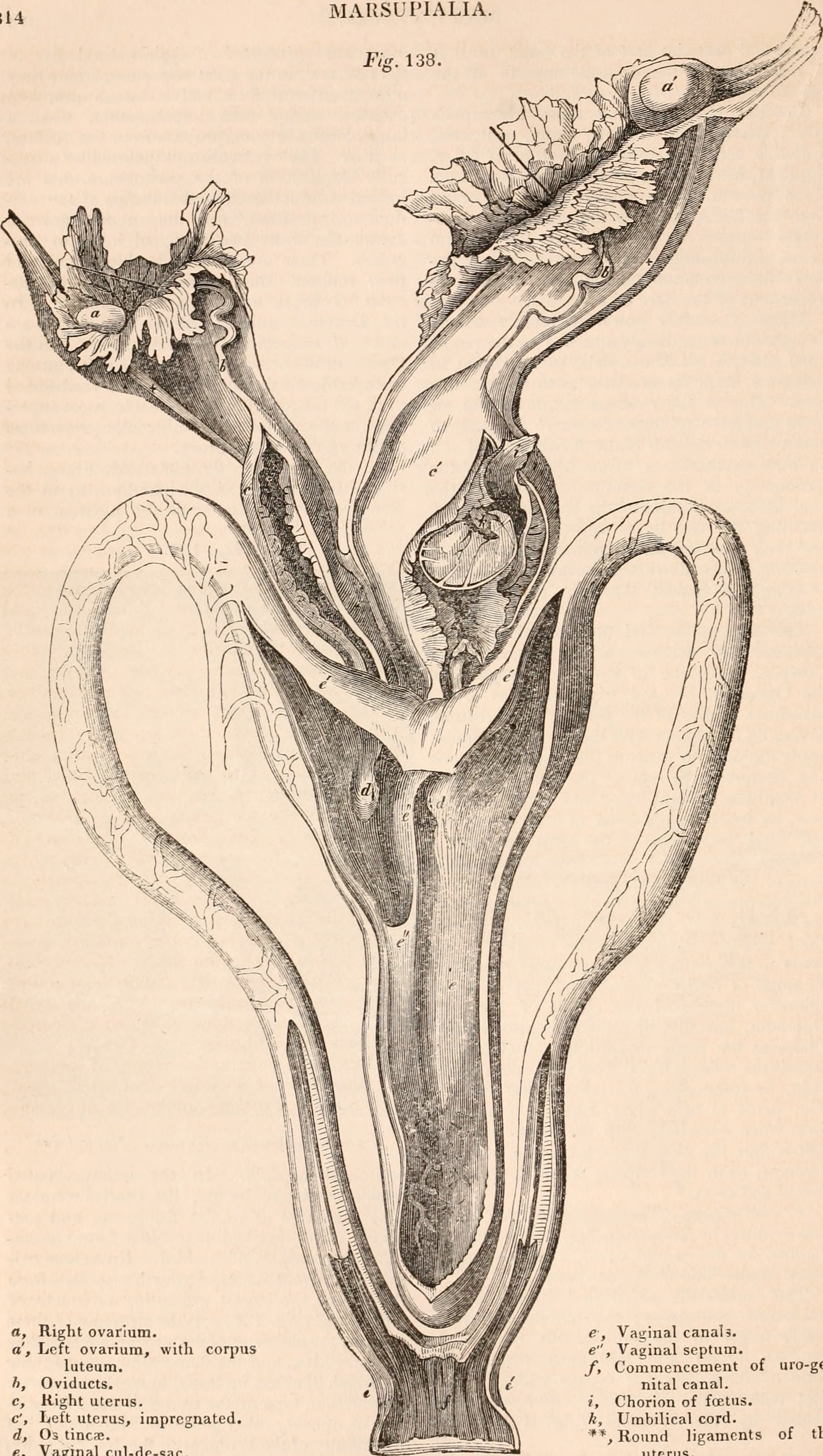 File:The cyclopædia of anatomy and physiology (1847) (20635053039 ...