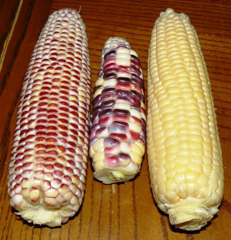 List Of Corn Products Food Inc