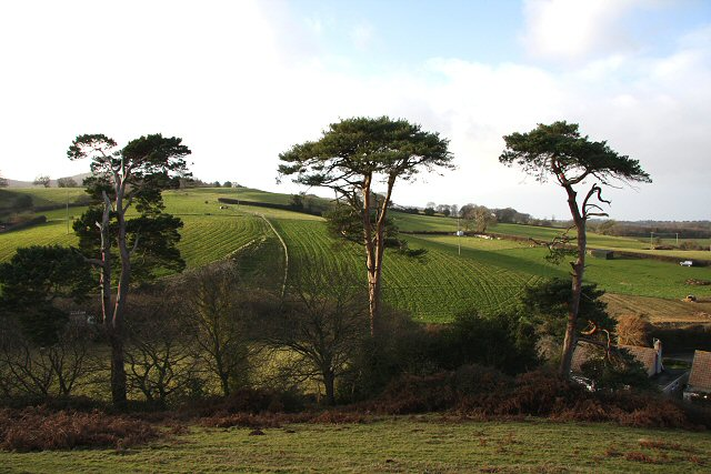Trees by Nether Stowey Castle - geograph.org.uk - 648336