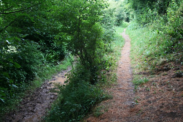 Two Paths - geograph.org.uk - 1397781