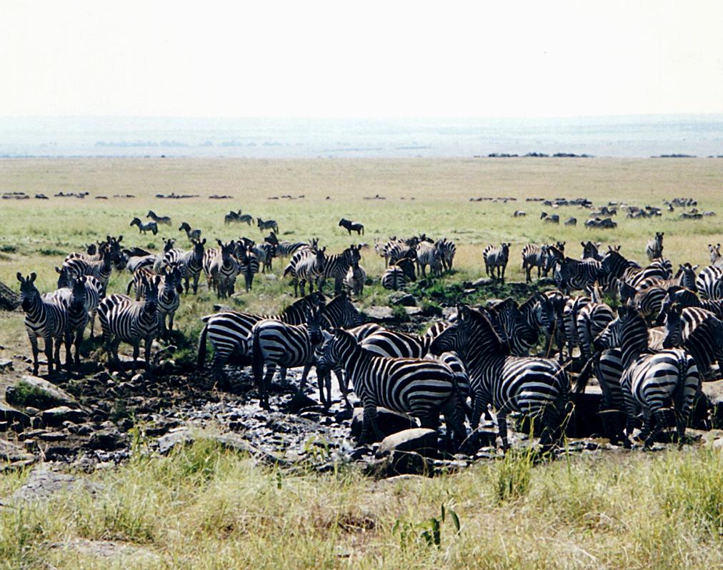 意外にも見どころいっぱい!アフリカの人気観光国ランキングTOP10                このまとめ記事の目次