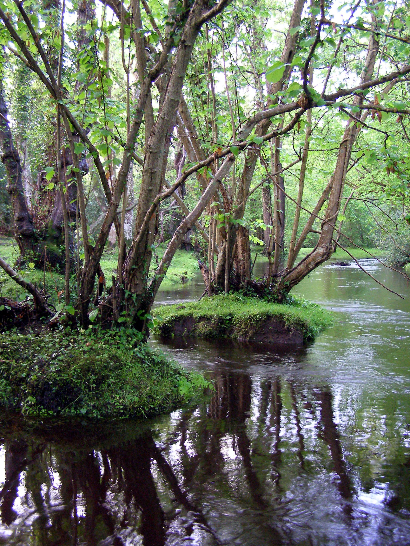 Description alder trees beaulieu river fawley ford