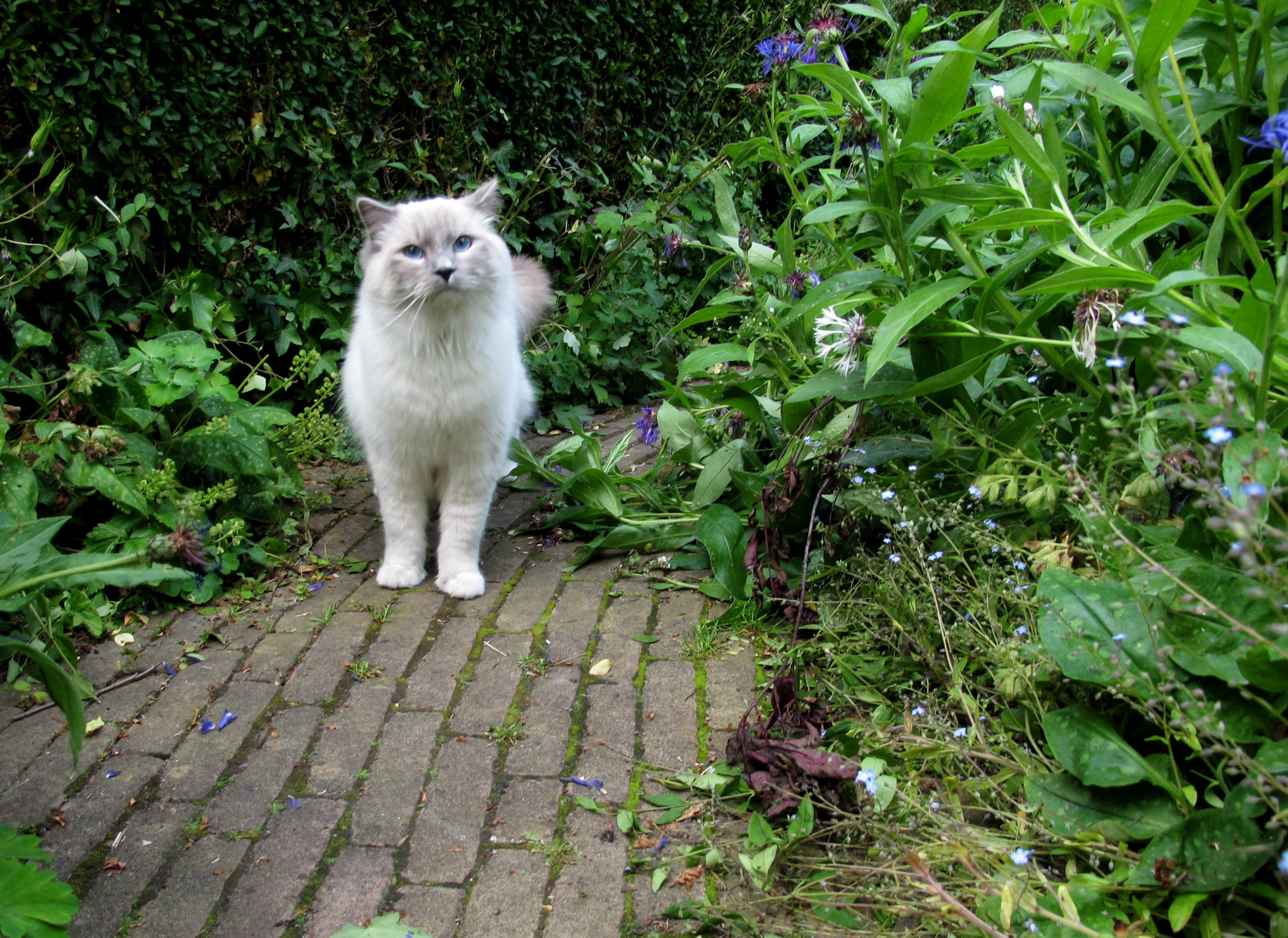 Great File:Cat In The Garden 1.JPG