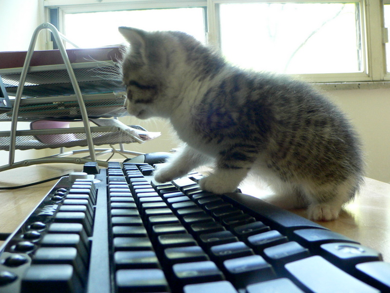 Cat playing keys