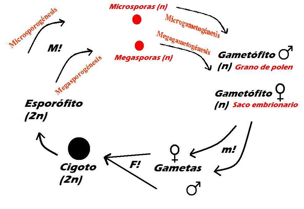 Angiosperms wikimedia commons ccuart Choice Image