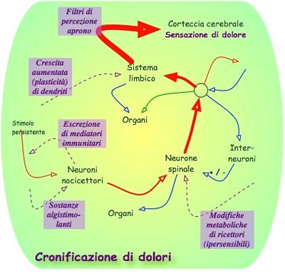 Tipi di cronicizzazione del dolore