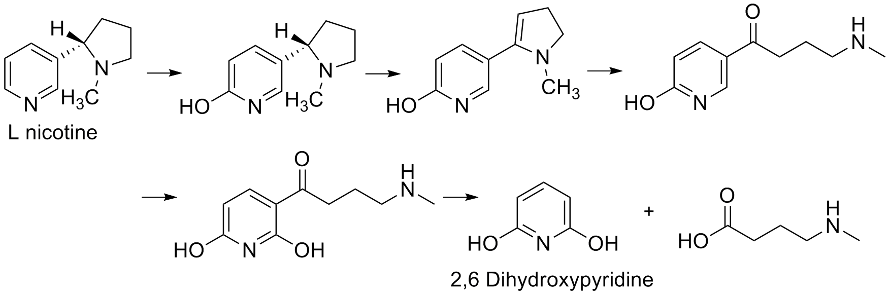 Degradation of L-nicotine by A. nicotinovorans.png