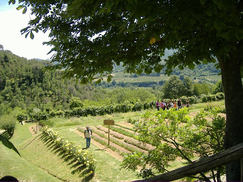 Giardino delle erbe augusto rinaldi ceroni wikipedia - Gradoni giardino ...