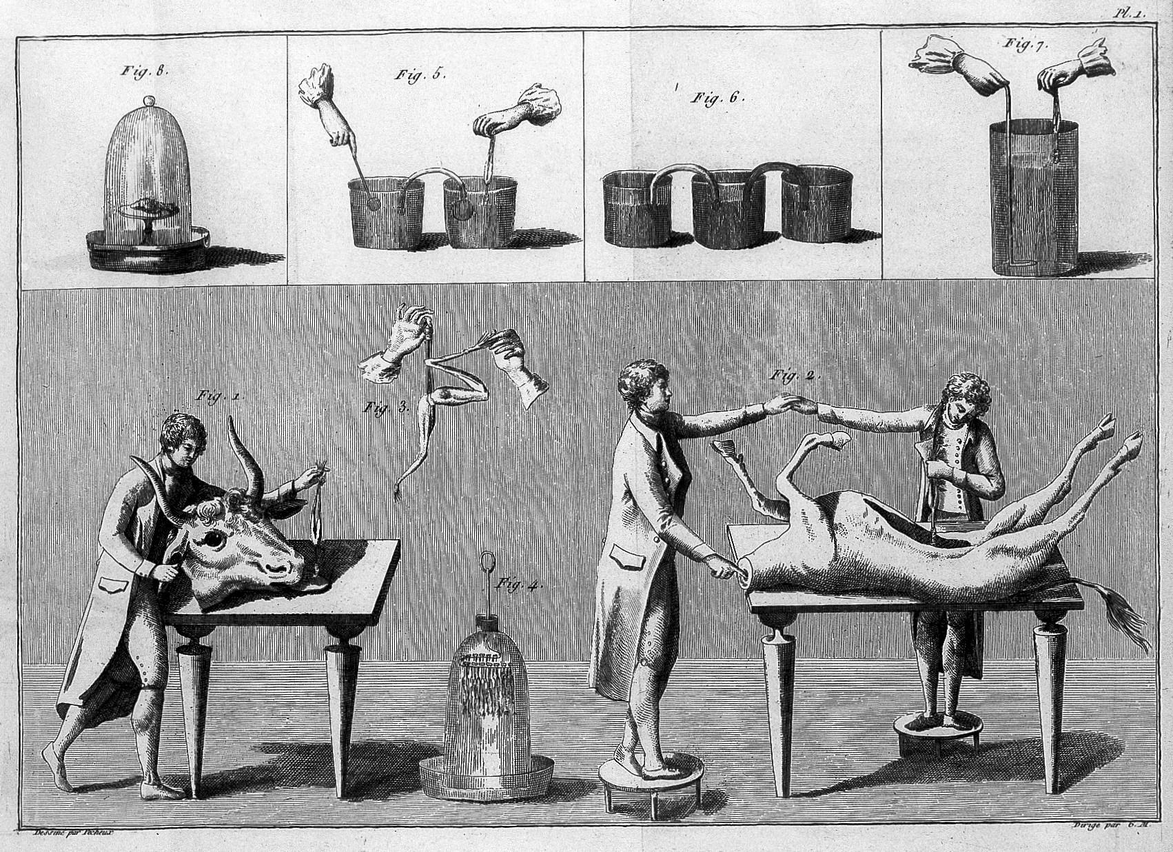 File:Giovanni Aldini, galvanism experiments Wellcome L0007025.jpg ...
