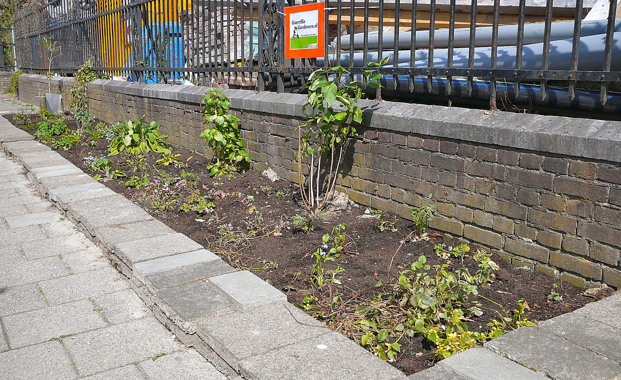 Guerilla Gardeners in den Niederlanden