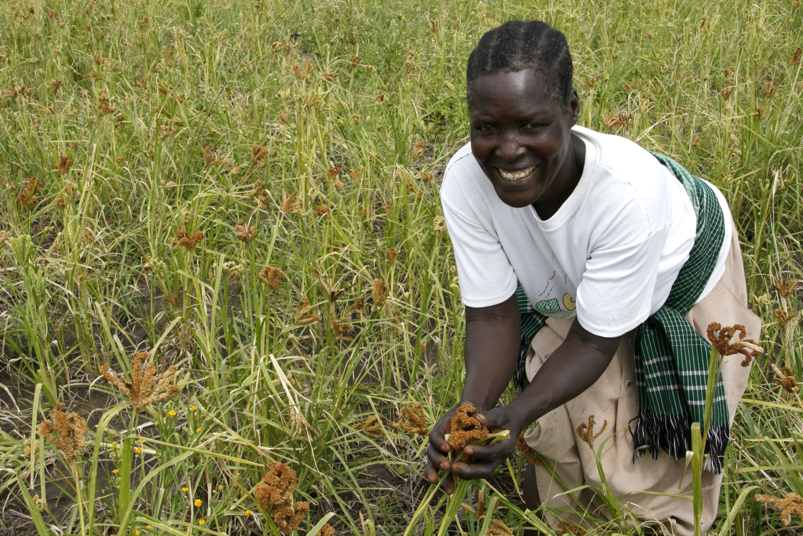 File:Harvesting hope after war in the fields of northern Uganda ...