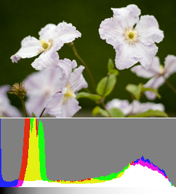An image exposed to the right (+1 EV) and its histogram. Details in the shadows are already discernible and the flowers are fully recoverable in post-production.