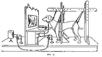 https://upload.wikimedia.org/wikipedia/commons/a/aa/Ivan_Pavlov_research_on_dog%27s_reflex_setup.jpg