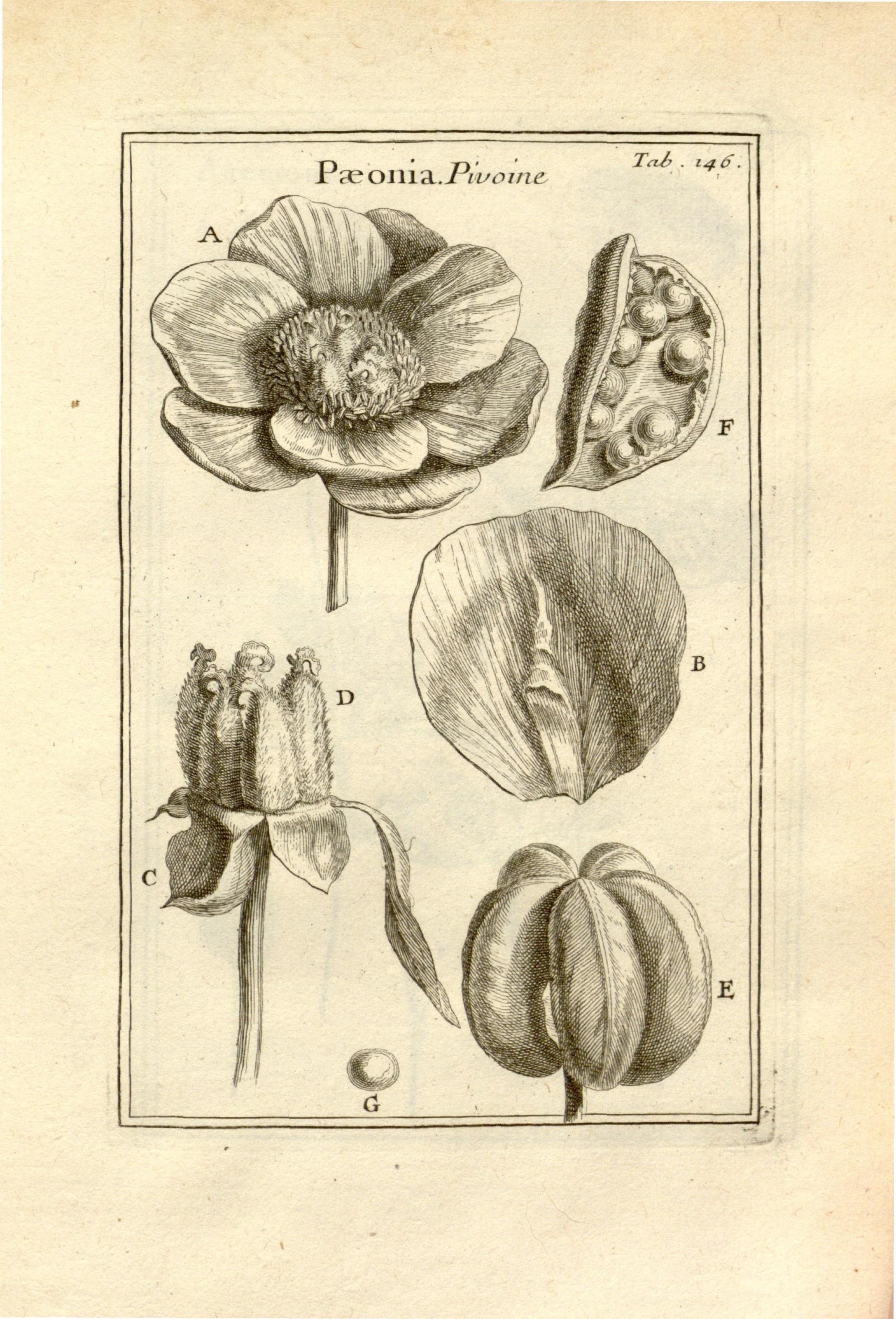 Botanical Art U0026 Artists