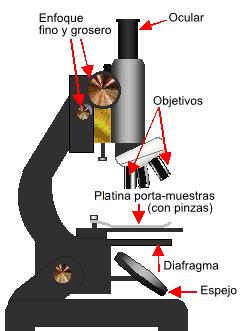 imagen parte microscopio: